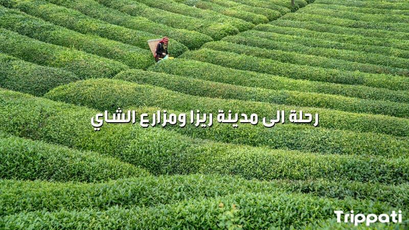 رحلة الى مدينة ريزا ومزارع الشاي , رحلة الى تركيا المسافرون العرب