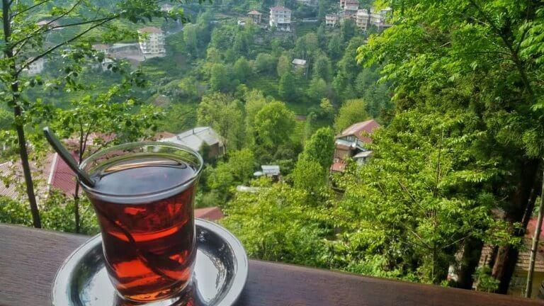 صورة لريزا وحدائق الشاي