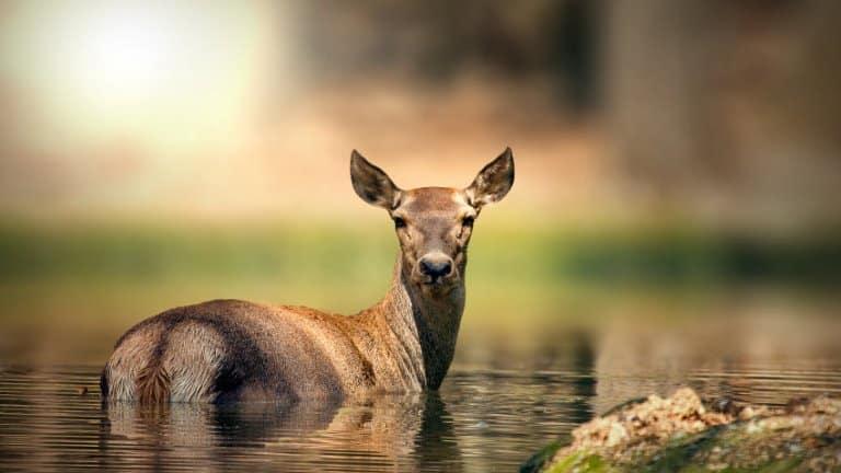 صورة لحديقة الحيوانات في سبانجا