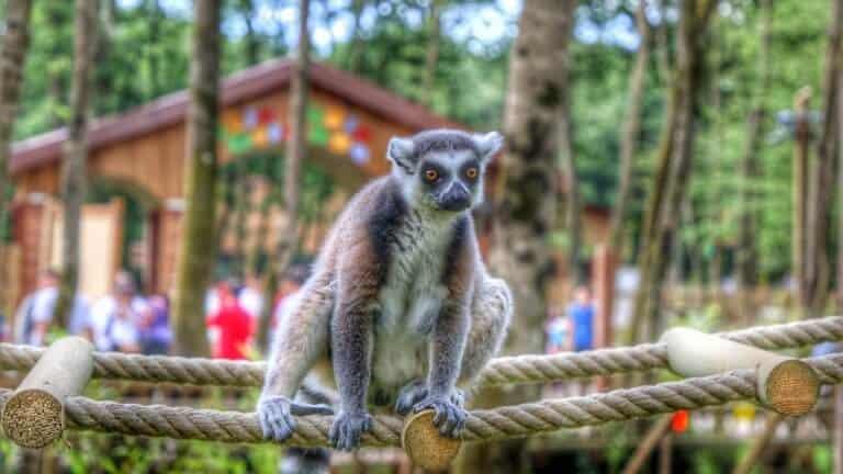 حديقة حيوانات أورمانيا