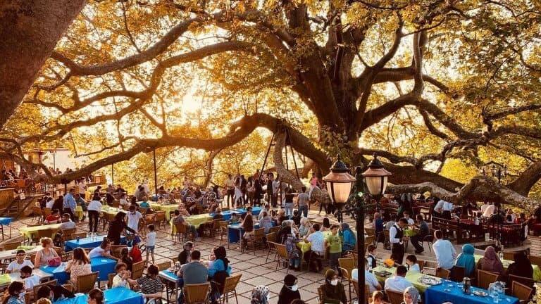 صورة للشجرة المعمرة في بورصة