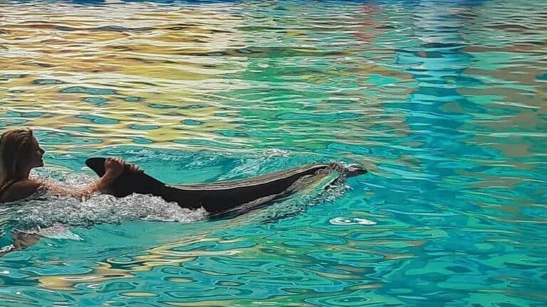 صورة لعرض الدلافين